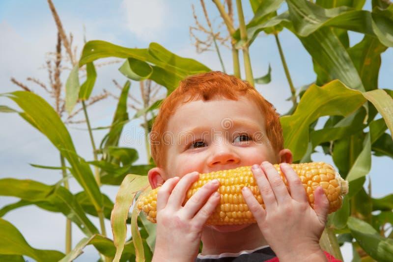 Enfant de garçon mangeant du maïs organique dans le jardin photos libres de droits