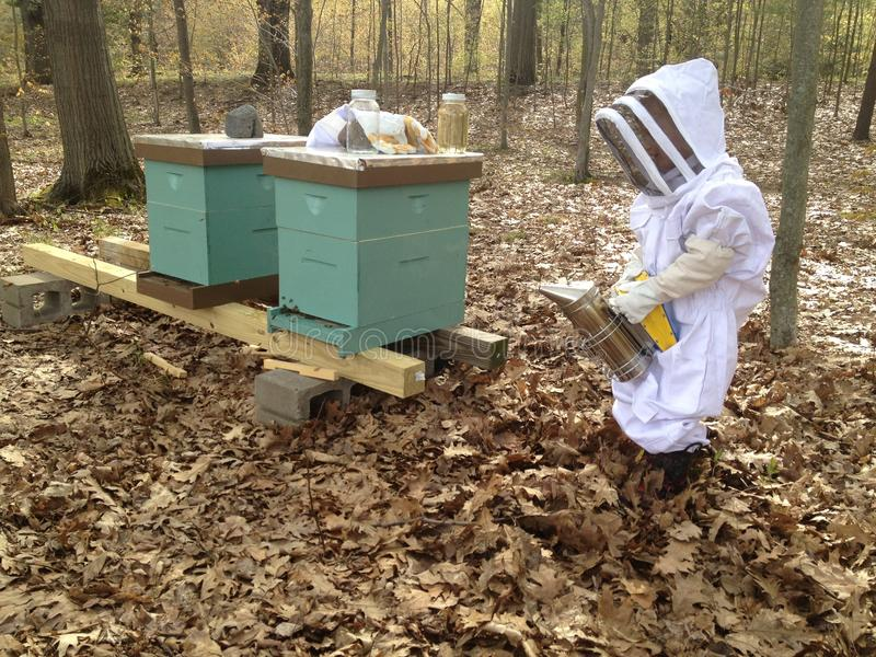 Enfant de l'apiculture photos libres de droits