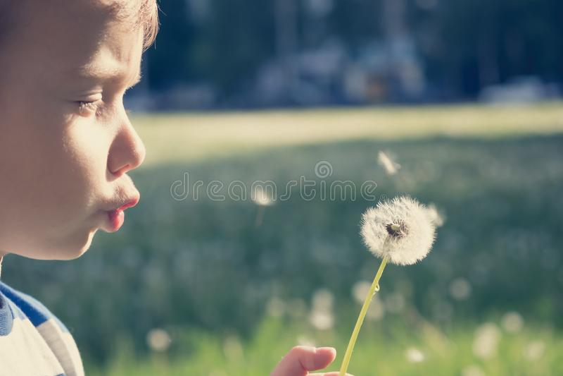 Enfant de nature de pissenlit peu mignon petit photographie stock libre de droits