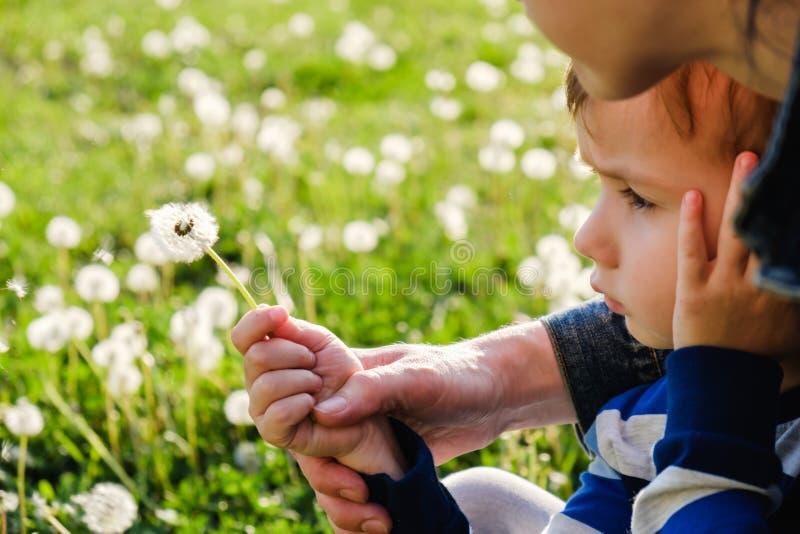 Enfant de nature de pissenlit peu mignon enfant petit photographie stock libre de droits