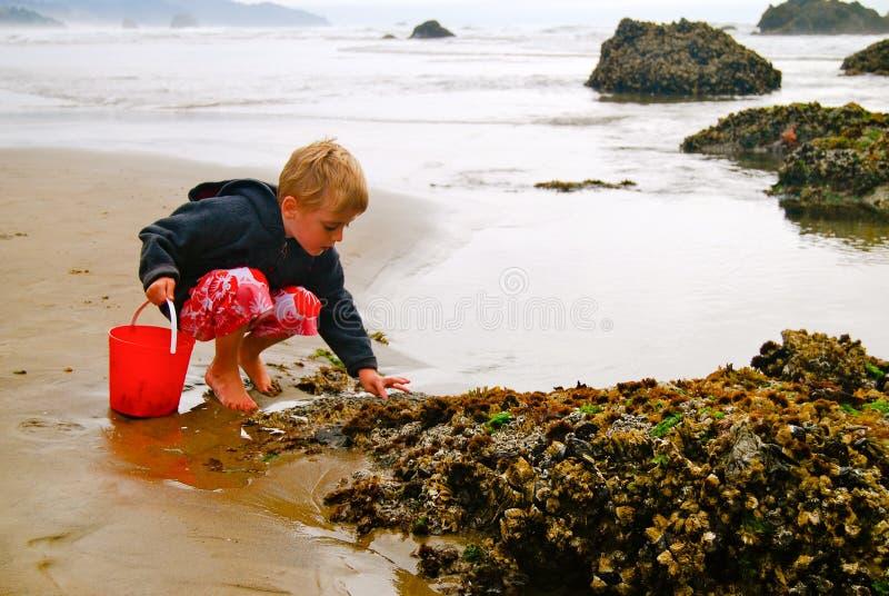 Enfant de plage de piscine de marée recherchant la vie marine image libre de droits