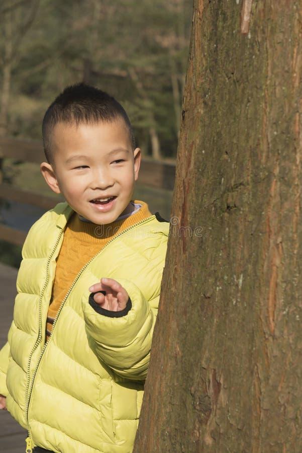 Enfant derrière l'arbre image libre de droits