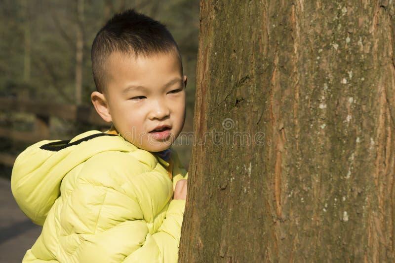 Enfant derrière l'arbre photo stock