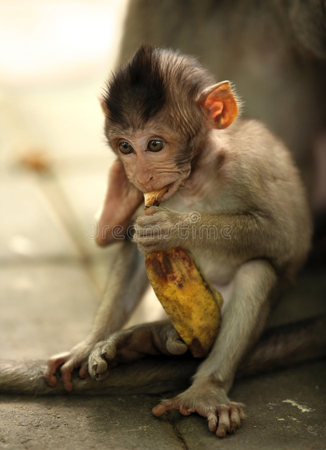 Enfant des singes photo stock