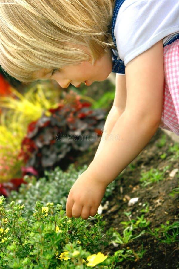 Enfant en bas âge avec la fleur en stationnement image stock