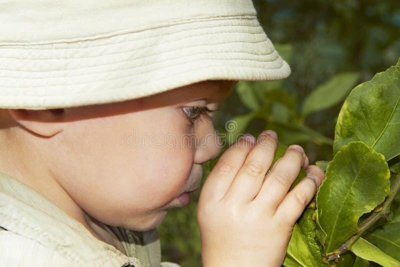 Enfant en bas âge et citron. images stock
