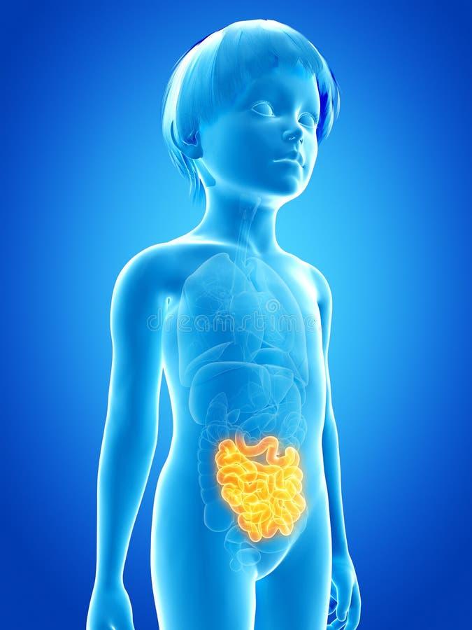 Enfant en bas âge - intestin grêle illustration de vecteur