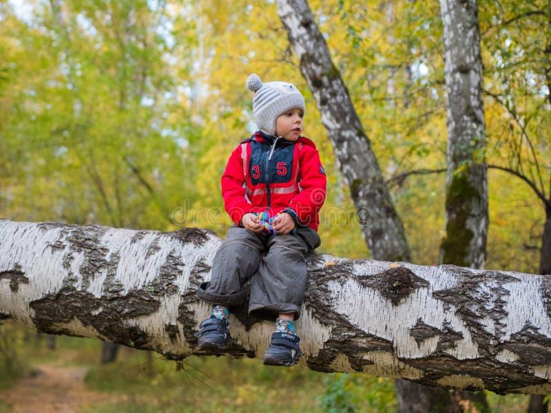 Enfant en parc d'automne ayant l'amusement jouant et riant, marchant dans l'air frais Arbre tombé Un bel endroit scénique image libre de droits