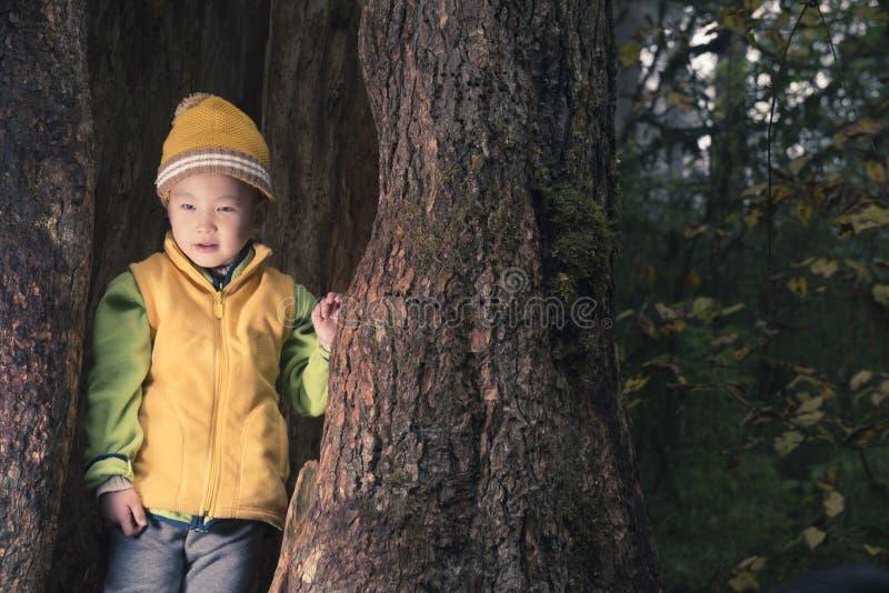 Enfant en trou d'arbre photographie stock libre de droits