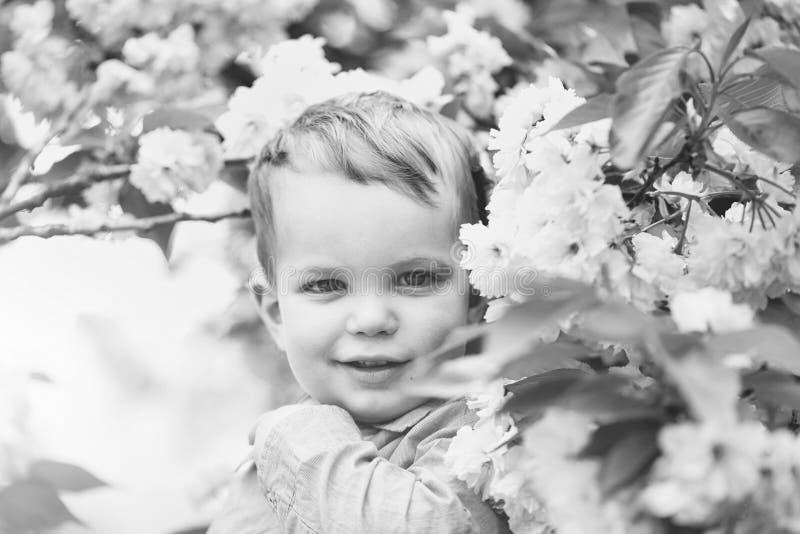 Enfant et arbres fleurissants Bébé garçon mignon parmi les fleurs de floraison de rose photo stock