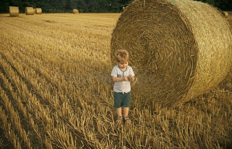Enfant et balles de foin sur le champ photographie stock libre de droits