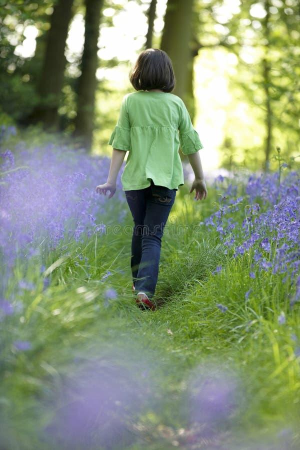 Enfant et bluebells photographie stock libre de droits
