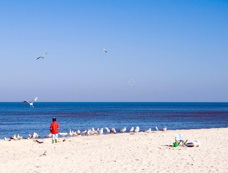 Enfant et mouettes de mer. photos libres de droits