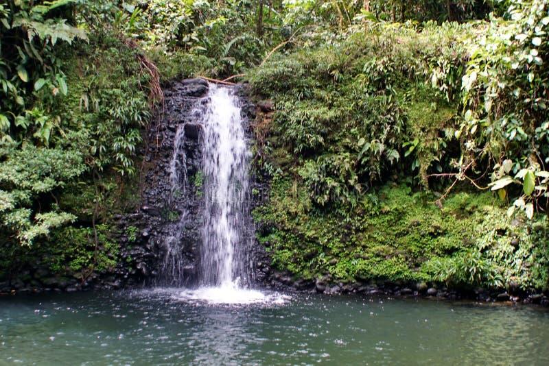 Enfant jouant au-dessous d'une cascade dans la jungle en Equateur images stock