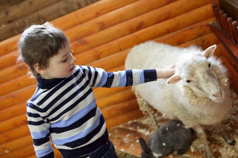 Enfant jouant avec l'agneau photo libre de droits
