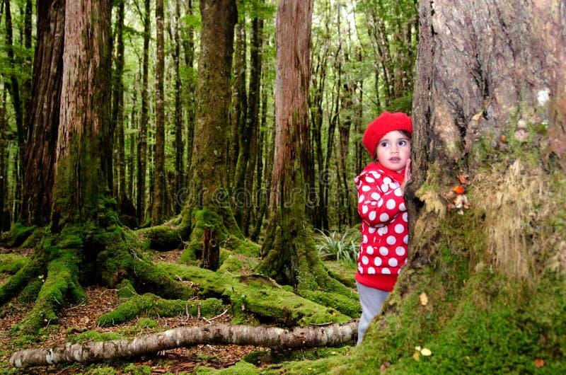Enfant perdu dans les bois image libre de droits