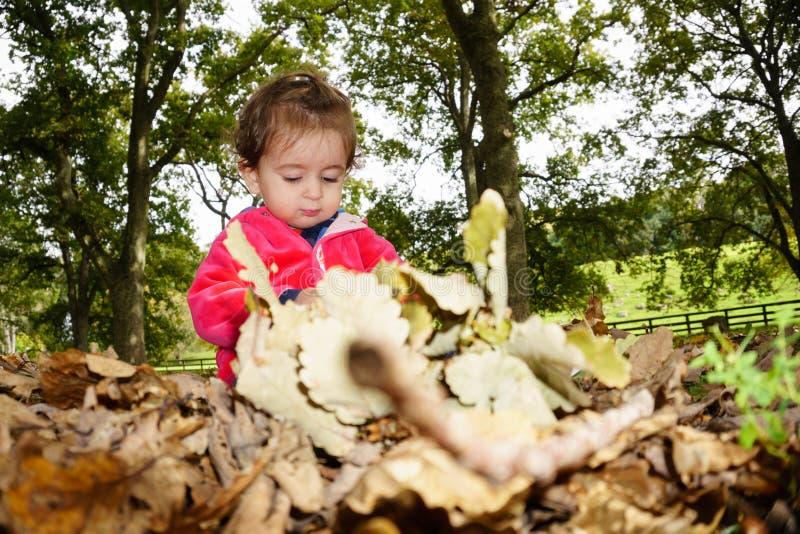 Enfant s'asseyant sur la concentration au sol de jouer avec des feuilles photos stock