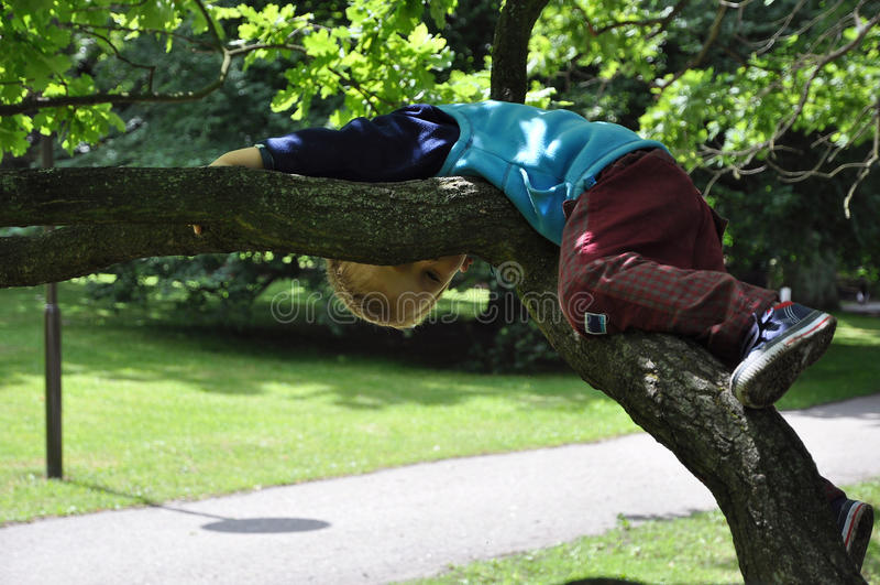 Enfant se trouvant sur le branchement d'arbre images libres de droits