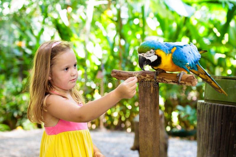 Enfants alimentant le perroquet d'ara Enfant jouant avec l'oiseau photographie stock