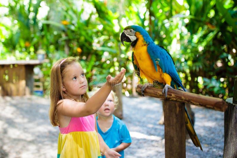 Enfants alimentant le perroquet d'ara Enfant jouant avec l'oiseau photo stock