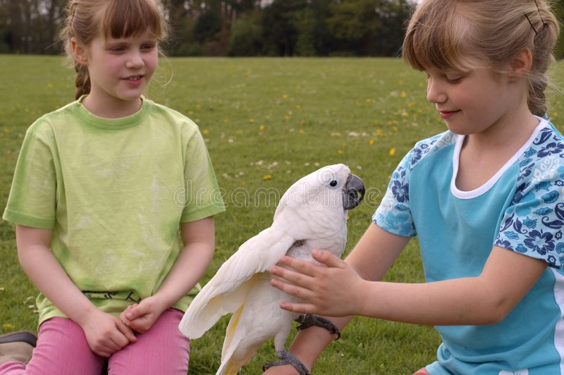 Download Enfants Avec Un Cockatoo Blanc Photo stock - Image du oeil, amusement: 736546