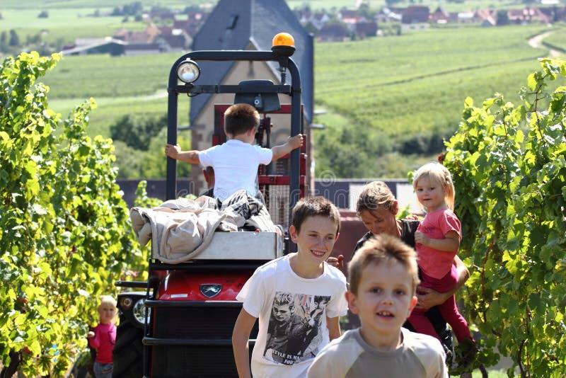 Enfants ayant l'amusement pendant la moisson de raisin photo libre de droits