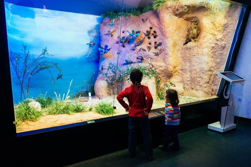 Enfants dans le musée d'histoire naturelle photos libres de droits