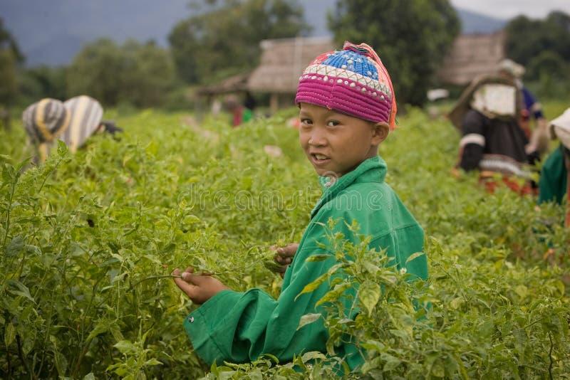 Enfants de l'ethnie de Palong moissonnant des poivrons de piments dans les domaines photos libres de droits