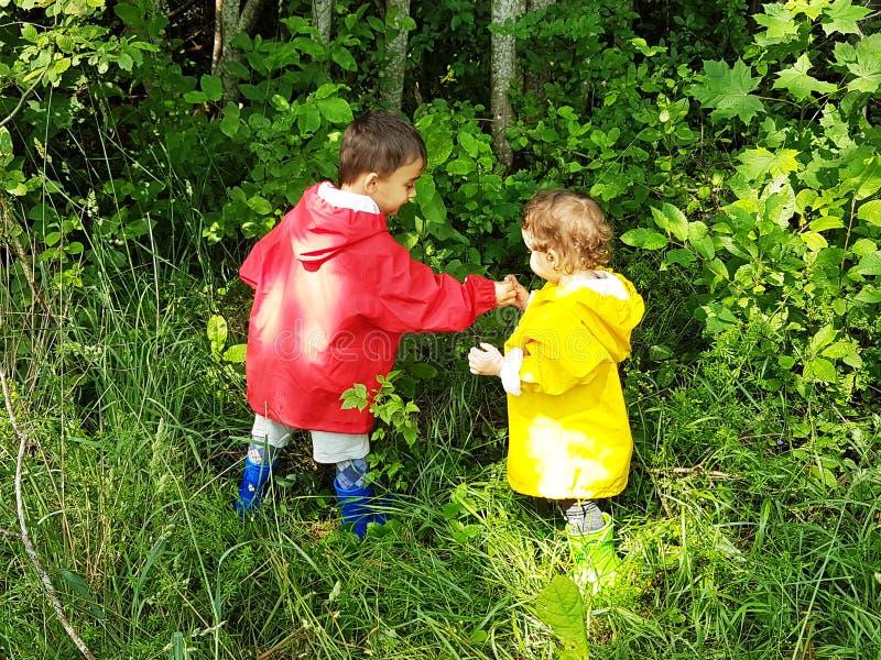 Enfants en bas âge mignons sélectionnant des baies de forêt photographie stock