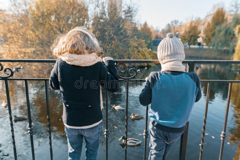 Enfants garçon et position de fille avec leurs dos près d'étang en parc, regardant les canards, jour ensoleillé d'automne en parc photos libres de droits