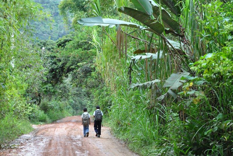 Enfants marchant par la jungle en Equateur photos libres de droits