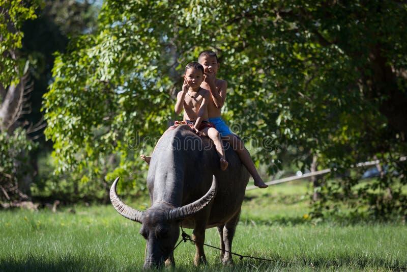 Enfants montant sur Buffalo image stock