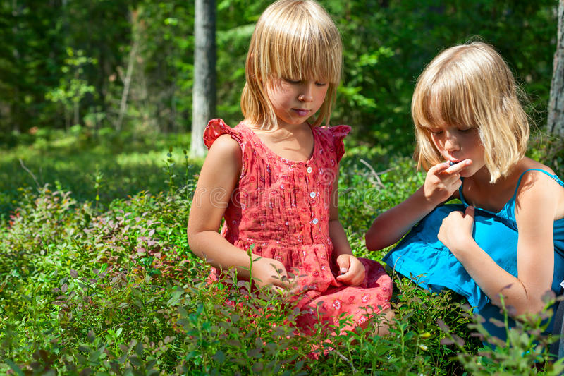 Enfants sélectionnant des baies dans une forêt d'été image libre de droits