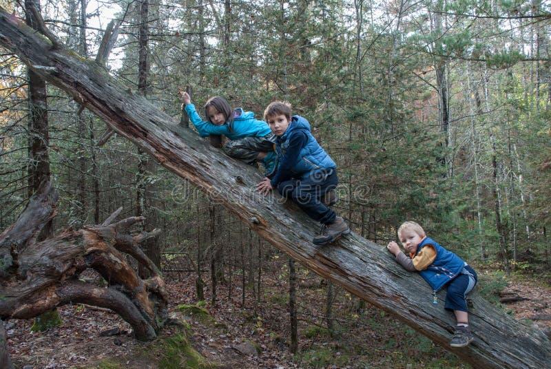 Enfants s'élevant au tronc d'un arbre mort photos stock
