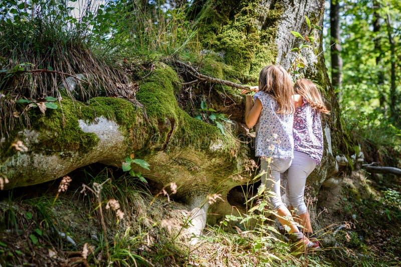Enfants trimardant en montagnes ou bois grimpant à l'arbre photo libre de droits