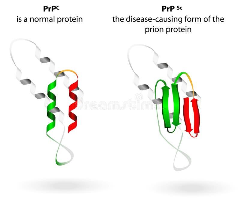 Enfermedades normales de la proteína y del prión. Esquema del vector ilustración del vector