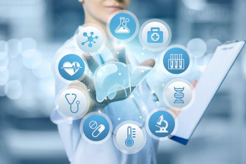 A enfermeira clica o fígado para a pesquisa imagem de stock royalty free
