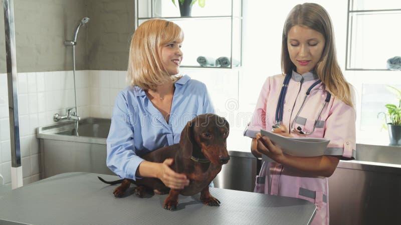 A enfermeira está tomando notas e está falando ao proprietário do cão imagens de stock royalty free