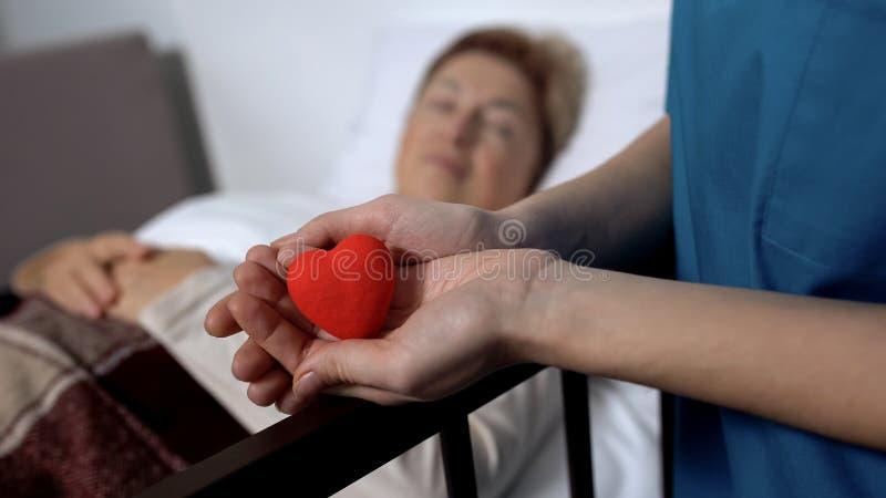 Enfermeira que guarda o brinquedo-cora??o nas m?os no fundo da mulher doente no leito do enfermo, bondade foto de stock