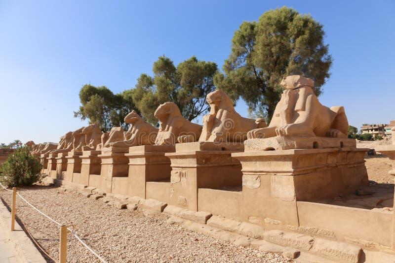 Enfonce la manière de statues au temple de Karnak à Louxor - l'Egypte images libres de droits