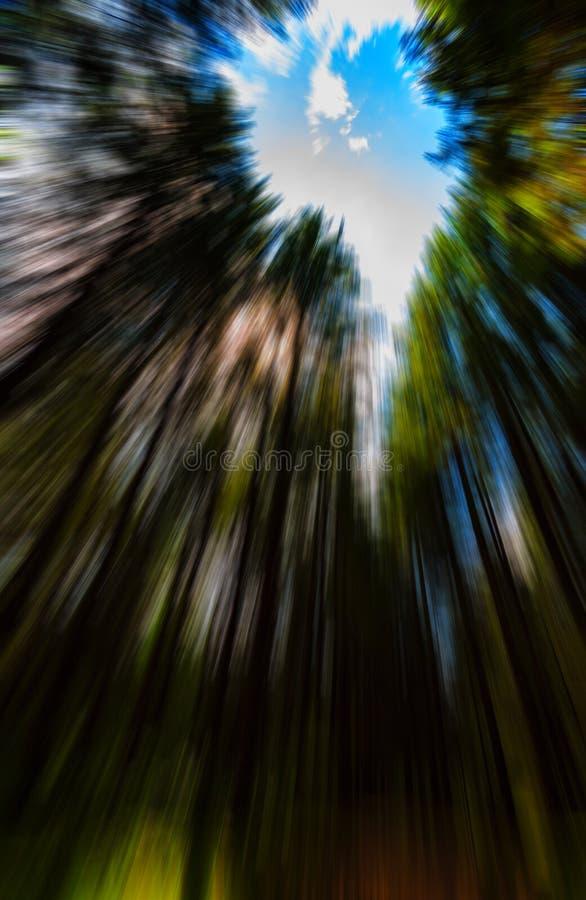 Enfoque radial vivo vertical fotografía de archivo