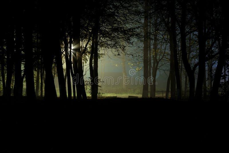 Eng donker bos bij nacht royalty-vrije stock foto's