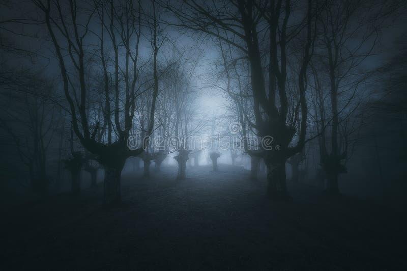 Eng donker bos met griezelige bomen stock foto