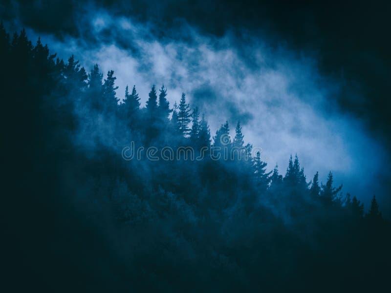 Eng geheimzinnig nevelig bos bij nacht stock foto's