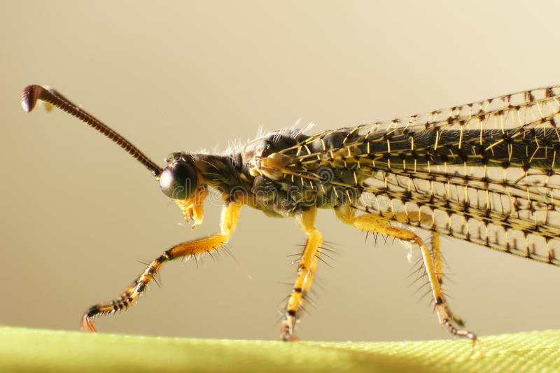 Eng insect royalty-vrije stock afbeeldingen