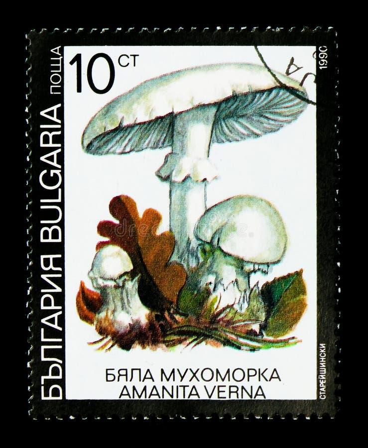 Engañe el verna de la amanita de la seta del ` s, serie de los hongos, circa 1991 fotos de archivo libres de regalías
