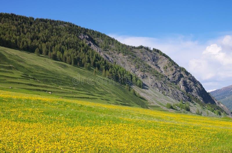 Engadin nära St Moritz arkivfoton