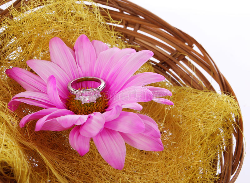 Engagement ring with hot pink chamomile flower in basket isolated stock photos