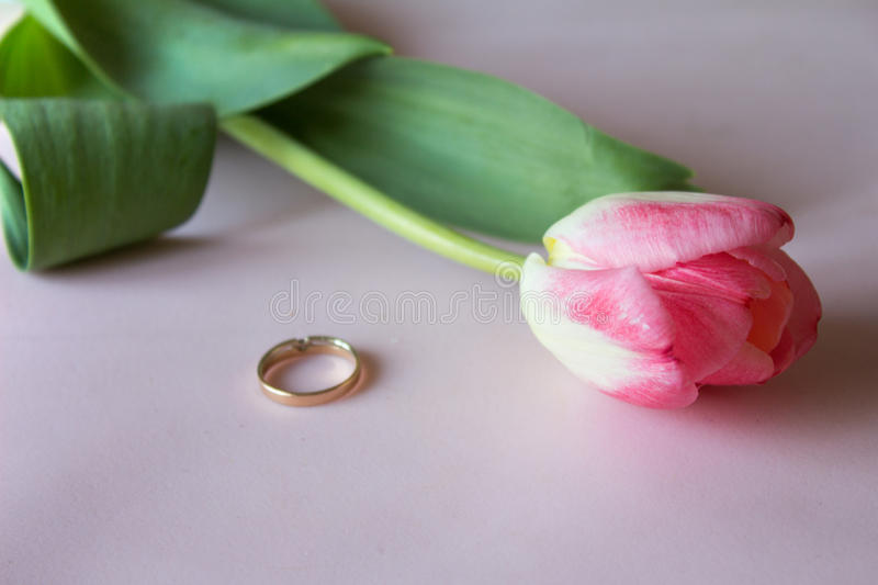 Engagement ring with pink tulip on the pink background royalty free stock photography
