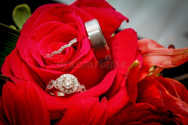 Engagement Ring and Wedding Ban in a Red Rose.  stock photos